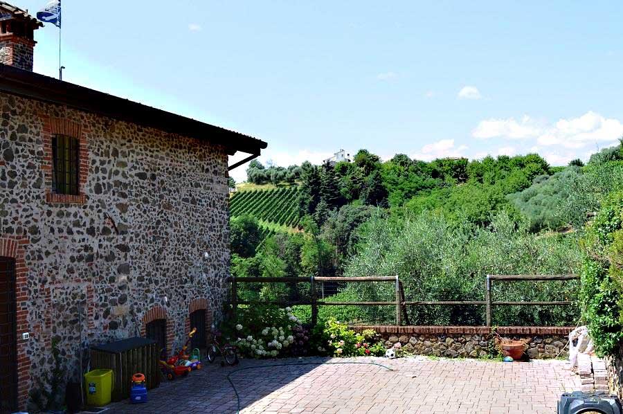 Views of Vineyards