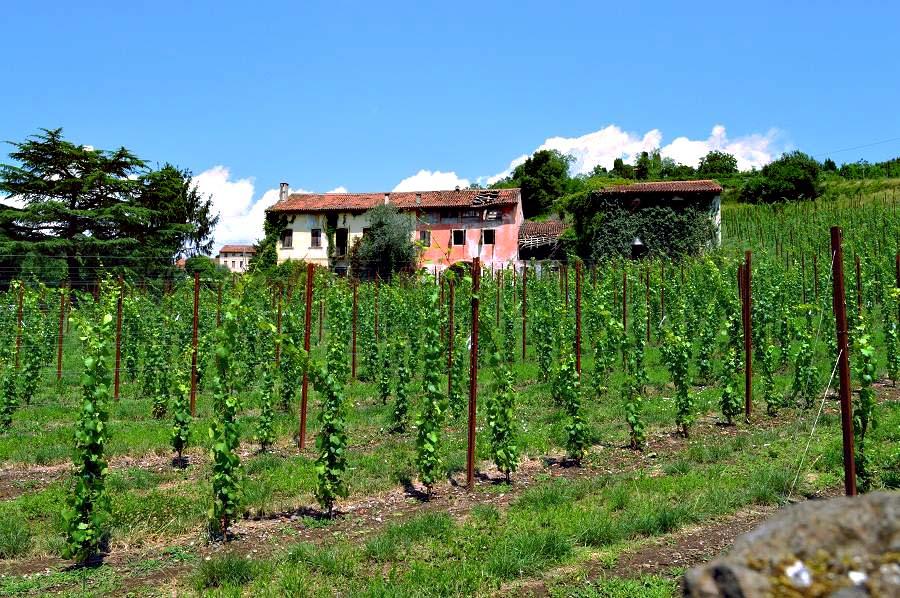 Vineyards near Breganze