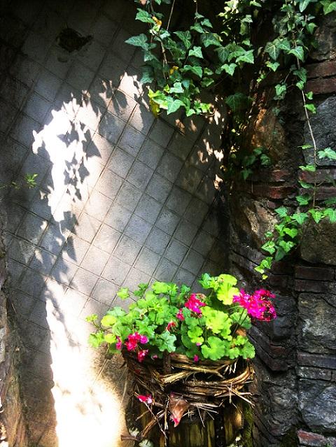Geraniums in Santorso