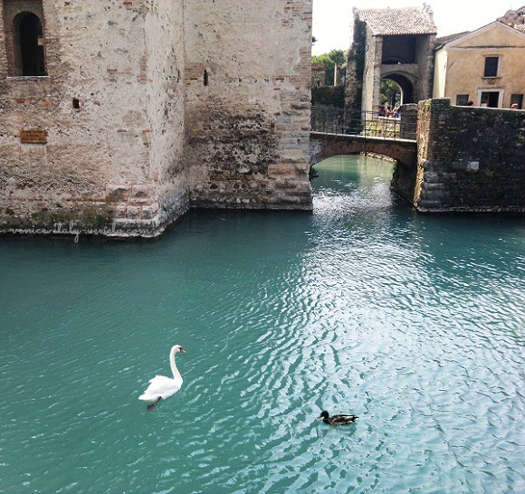 Swan at the Castle