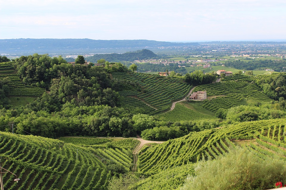 Wine region of Italy
