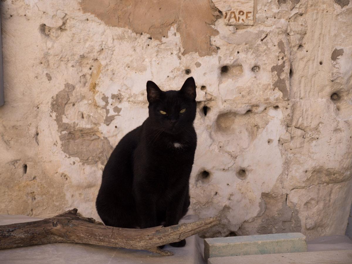 A Cat in Matera