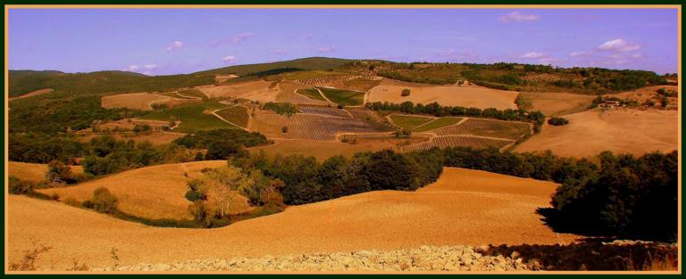 Summer fields in Tuscany