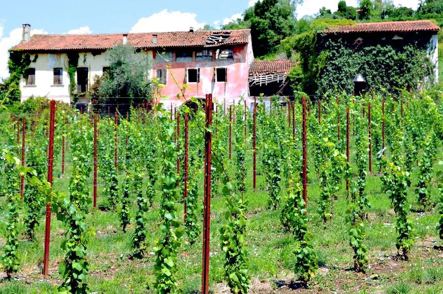 Winery near Venice