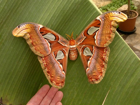 butterfly park Italy