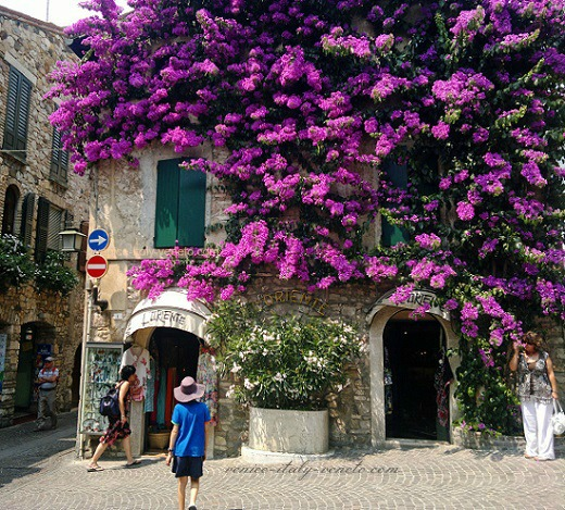 House covered in Bouganvillea