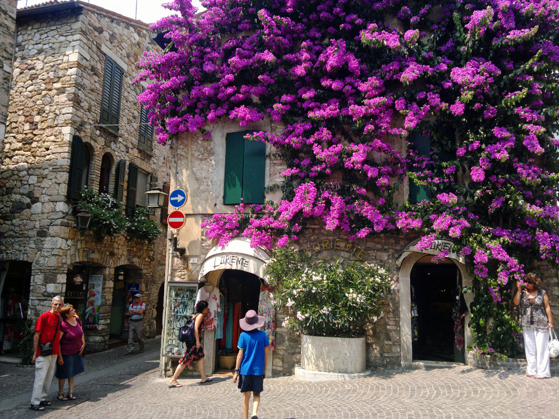 Bouganvillea in Sirmione