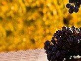 Wines Veneto